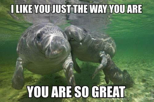 Manatee - I LIKE YOU JUST THE WAY YOU ARE YOU ARE SO GREAT ENG ECNG.