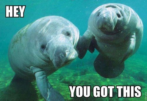 Manatee - HEY YOU GOT THIS