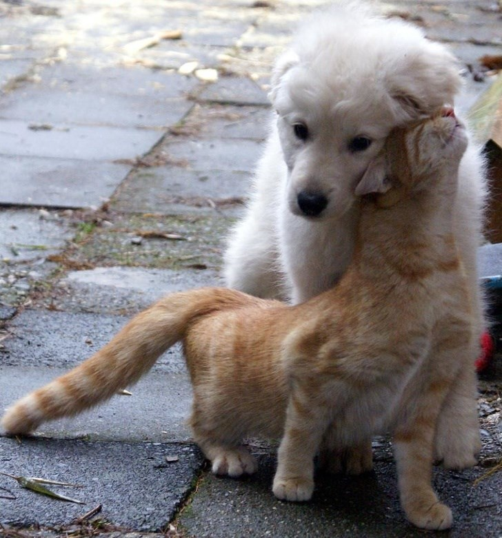 dogs and cats - Dog