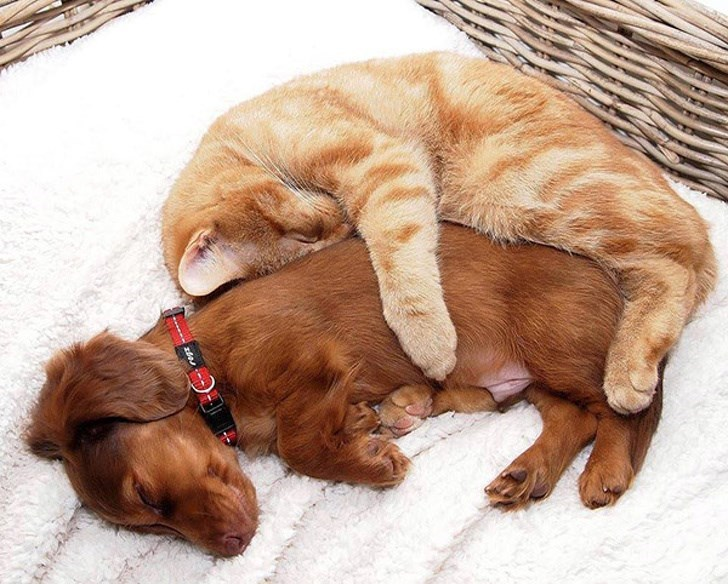 dogs and cats - Canidae