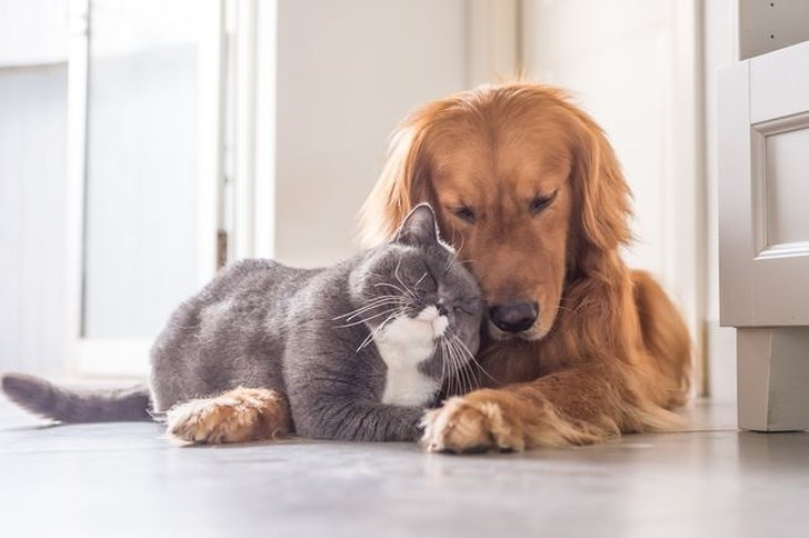 dogs and cats - Vertebrate