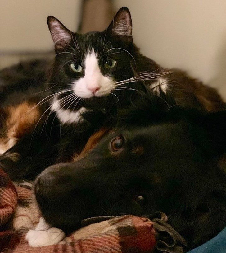 dogs and cats - Cat