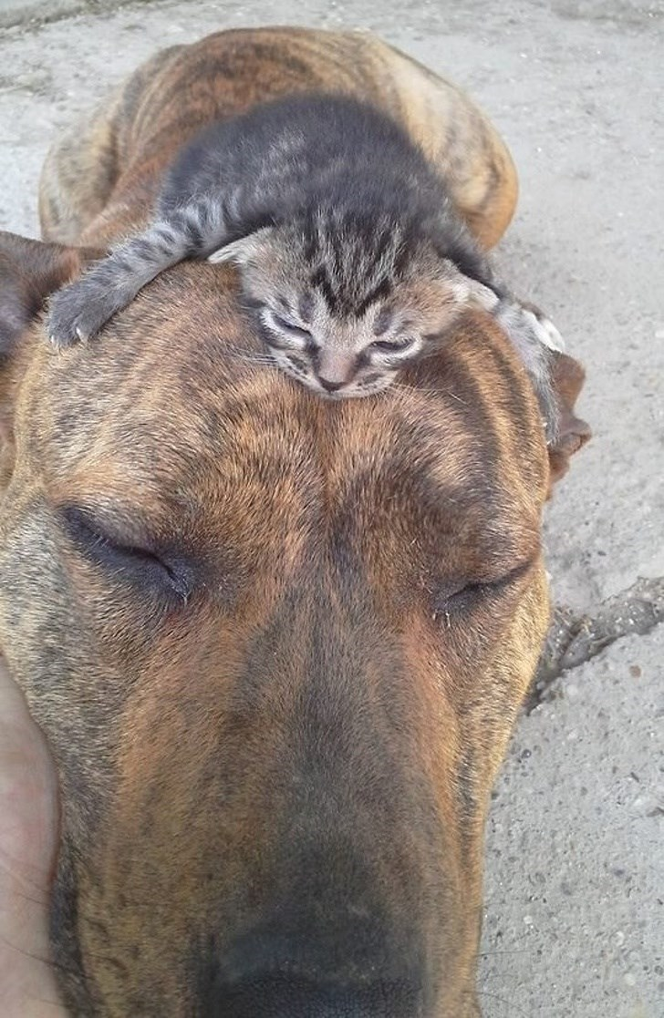 dogs and cats - Mammal