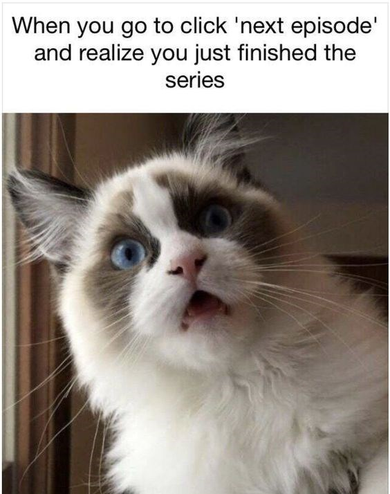 Cat - When you go to click 'next episode' and realize you just finished the series
