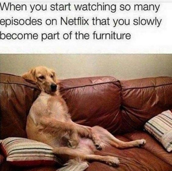 Dog - When you start watching so many episodes on Netflix that you slowly become part of the furniture