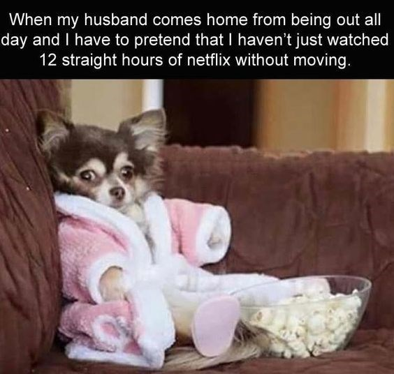Canidae - When my husband comes home from being out all day and I have to pretend that I haven't just watched 12 straight hours of netflix without moving.