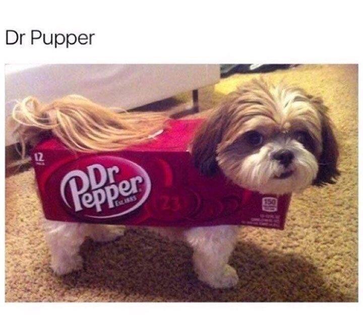 Dog - Dr Pupper 12 Pepper 23 150