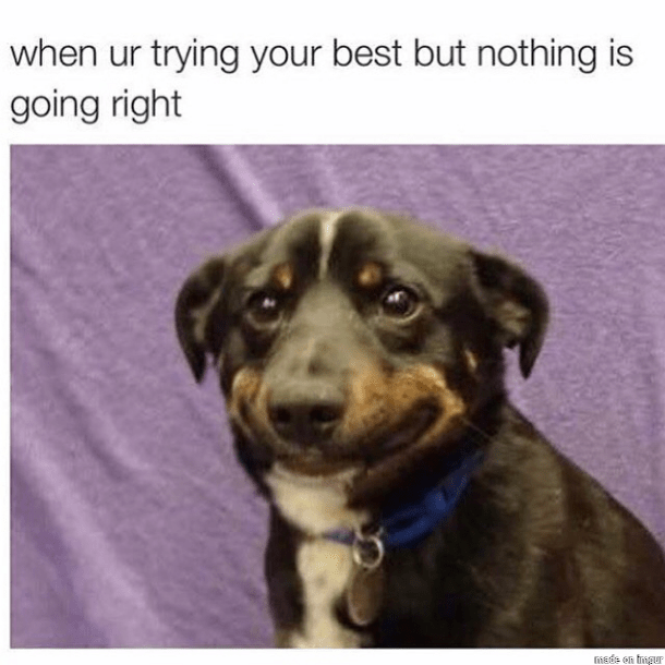 Dog - when ur trying your best but nothing is going right itsde en ingur