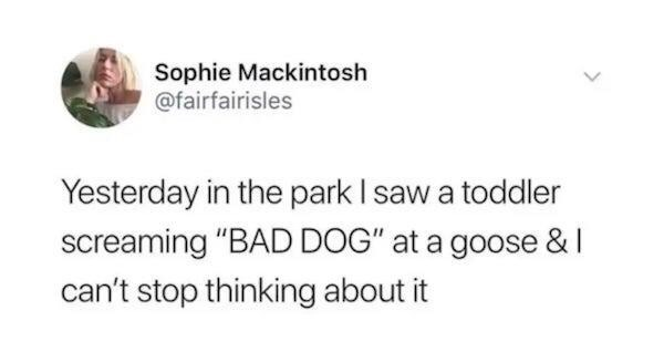 """Text - Sophie Mackintosh @fairfairisles Yesterday in the park I saw a toddler screaming """"BAD DOG"""" at a goose &I can't stop thinking about it"""