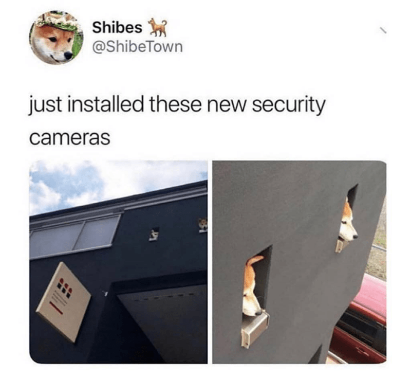 Technology - Shibes @ShibeTown just installed these new security cameras