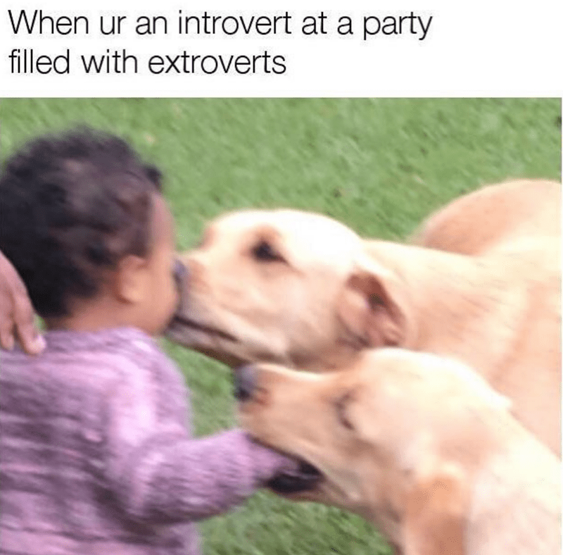 Mammal - When ur an introvert at a party filled with extroverts