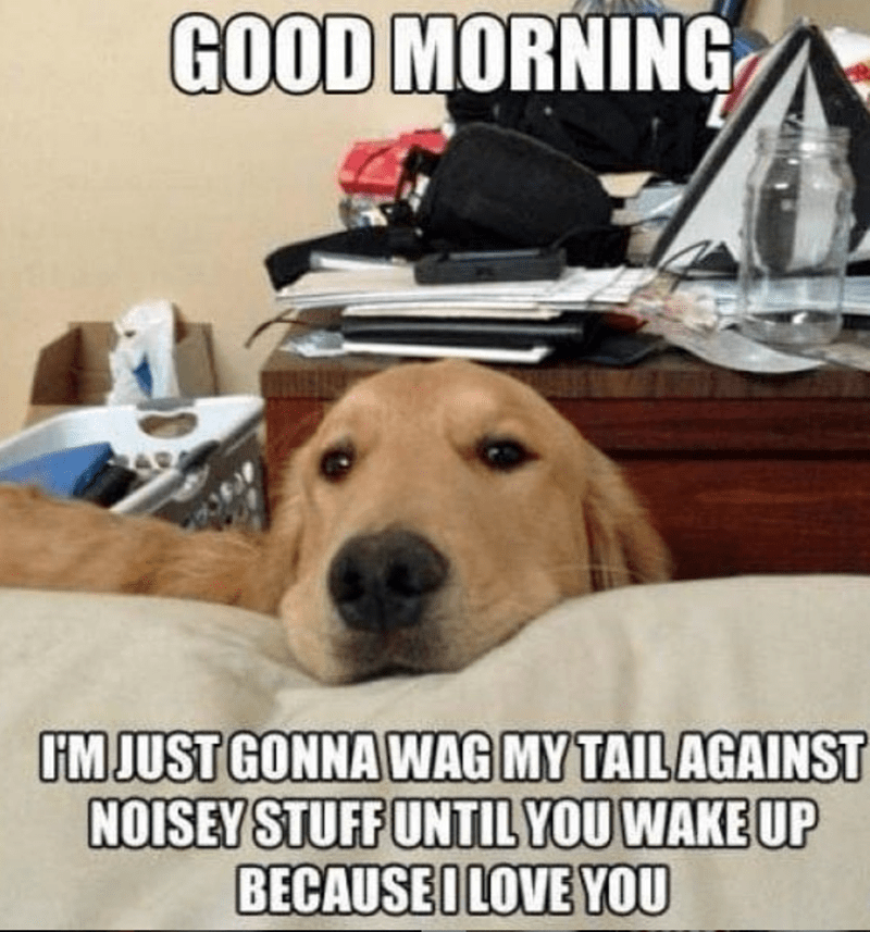 Dog - GOOD MORNING IMJUST GONNA WAG MY TAILAGAINST NOISEY STUFF UNTIL YOU WAKE UP BECAUSEI LOVE YOU
