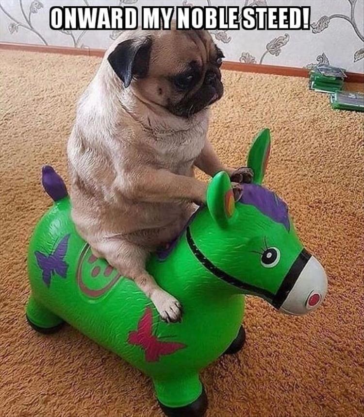 Pug - ONWARD MY NOBLE STEED!