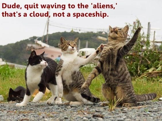 Cat - Dude, quit waving to the 'aliens,' that's a cloud, not a spaceship.