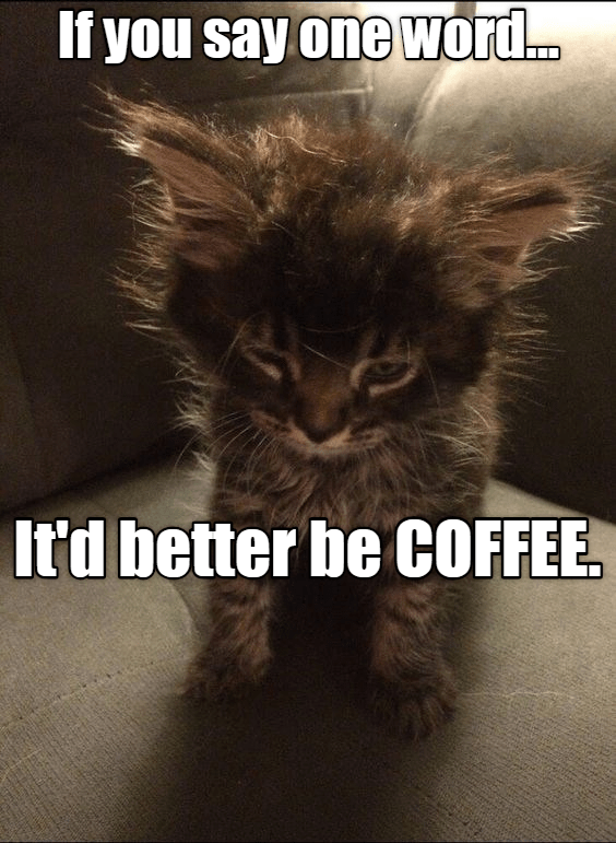 Cat - If you say one word... Itd better be COFFEE