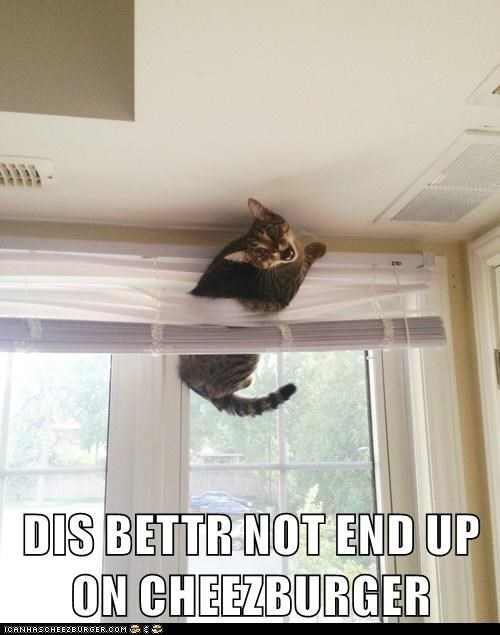 Ceiling - DIS BETTR NOT END UP ON CHEEZBURGER ICANHASCHEE2EURGER.cOM