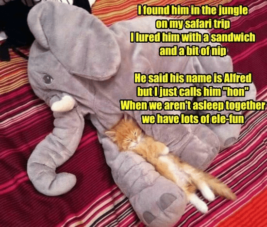 """Hand - Ifound himin the jungle On my safari trip Ilured him withasandwich andabitofnip He said his name isAlfred butljust calls him""""hon"""" When we arent asleep together we have lots of ele-fun"""