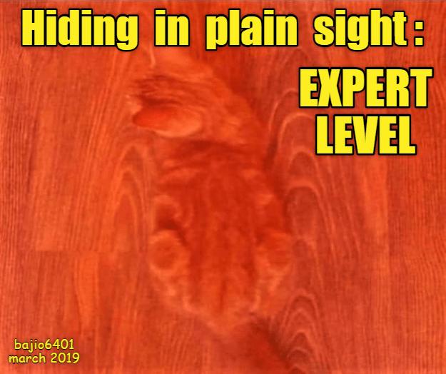 Text - Hiding in plain sight EXPERT LEVEL bajio6401 march 2019