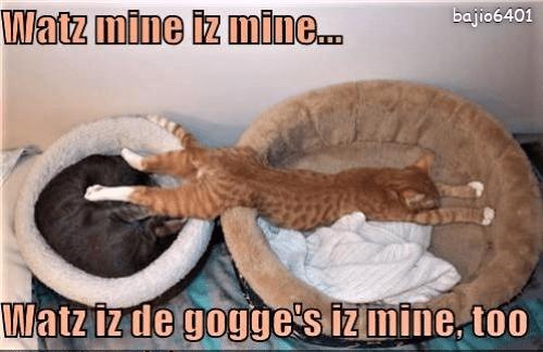 Cat - bajio6401 Watz mine iz mine... Matzizde goggesizmine, too