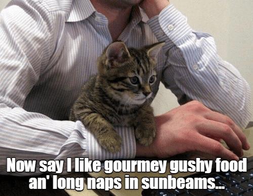 Cat - Now say I like gourmey gushy food an' long naps in sunbeams