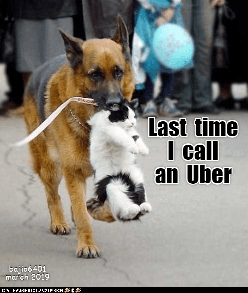 Dog - Last time I call an Uber bajio6401 march 2019 ICANHASCHEE2EURGER cOM