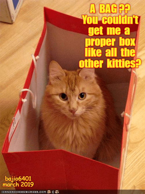 Cat - A BAG? You couldn't get me a proper box like all the other kitties? bajio6401 march 2019