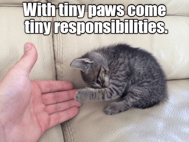 Cat - With tiny paws come tiny responsibilities.