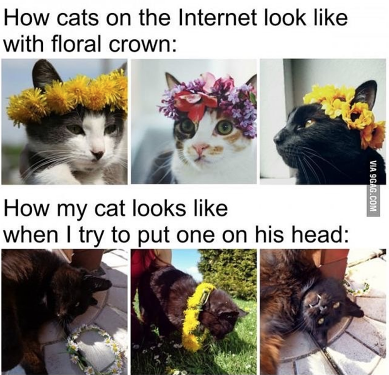 caturday cat memes - Cat - How cats on the Internet look like with floral crown: How my cat looks like when I try to put one on his head: VIA 9GAG.COM
