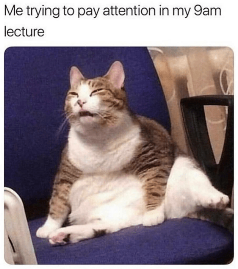 caturday cat memes - Cat - Me trying to pay attention in my 9am lecture