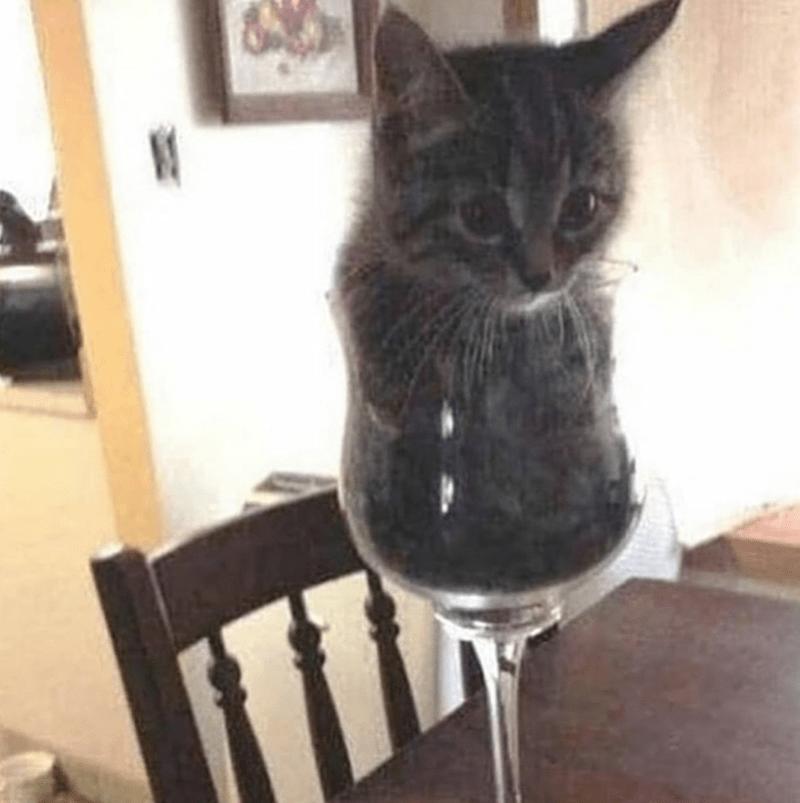 caturday cat memes - Cat