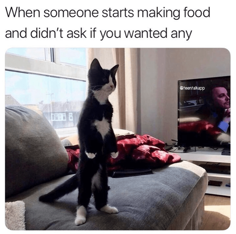 caturday cat memes - Cat - When someone starts making food and didn't ask if you wanted any @teentalkapp