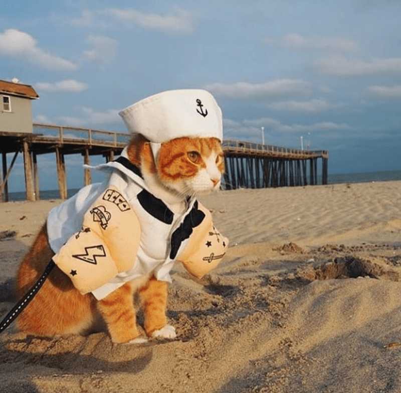 caturday cat memes - Dog - 4