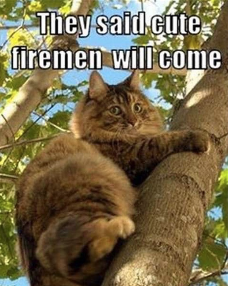 caturday cat memes - Cat - They said cute firemen will come