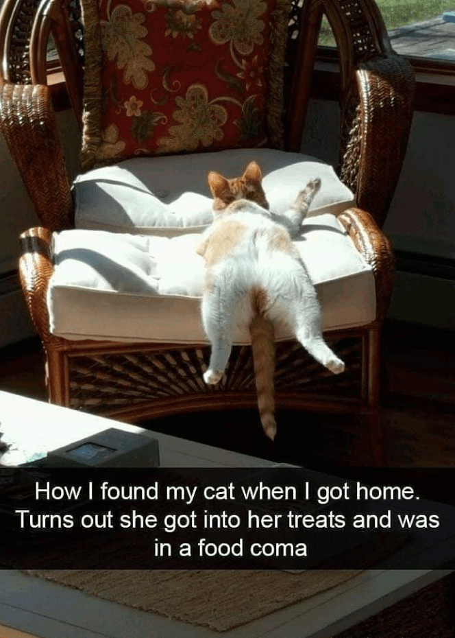 caturday cat memes - Furniture - How I found my cat when I got home. Turns out she got into her treats and in a food coma