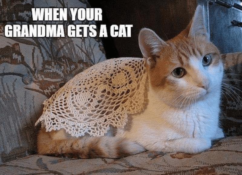 caturday cat memes - Cat - WHEN YOUR GRANDMA GETSA CAT