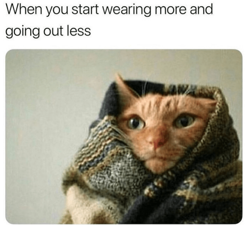 caturday cat memes - Cat - When you start wearing more and going out less LAW