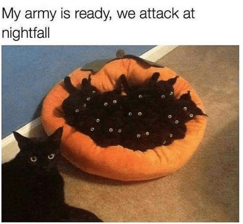 caturday cat memes - Cat - My army is ready, we attack at nightfall