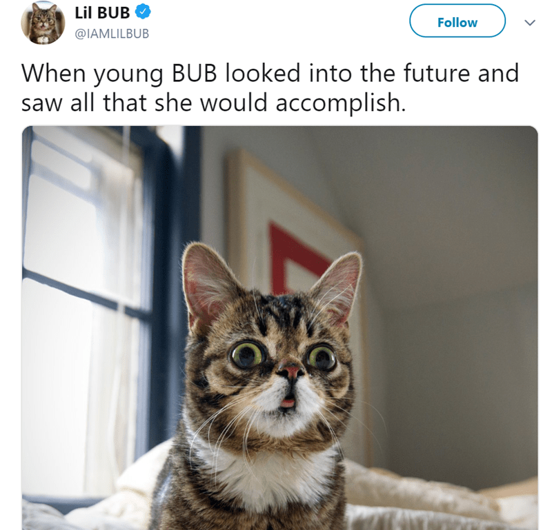 Cat - Lil BUB Follow @IAMLILBUB When young BUB looked into the future and saw all that she would accomplish.