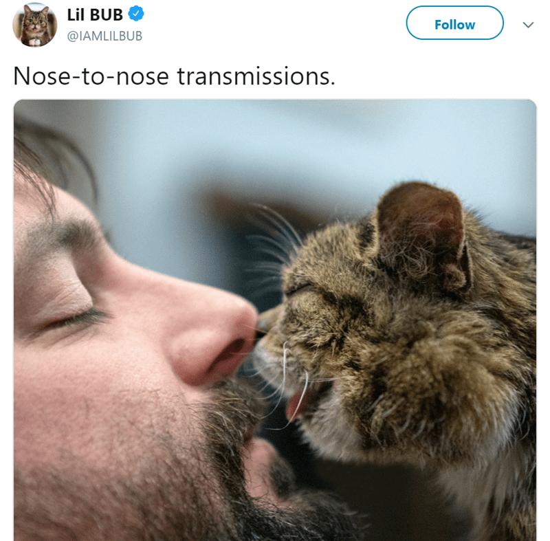 Nose - Lil BUB Follow @IAMLILBUB Nose-to-nose transmissions.