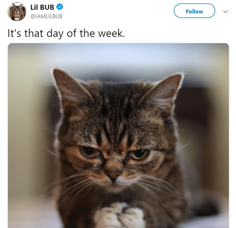 Cat - Lil BUB Follow @IAMLILBUB It's that day of the week.