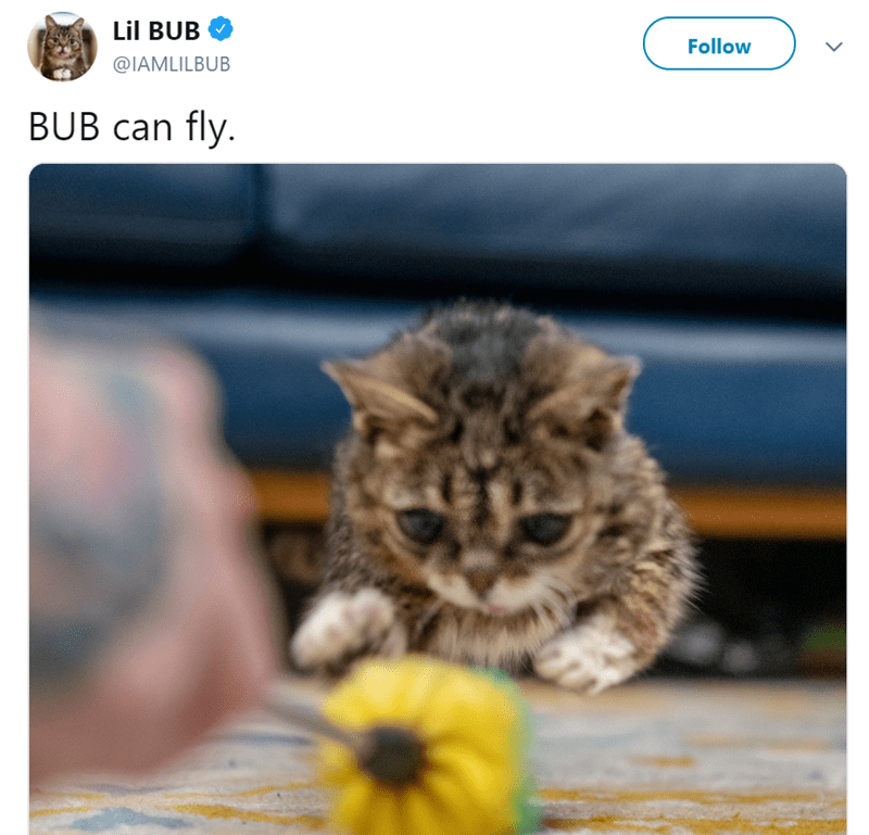Cat - Lil BUB Follow @IAMLILBUB BUB can fly