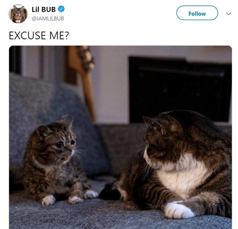 Cat - Lil BUB Follow @IAMLILBUB EXCUSE ME?