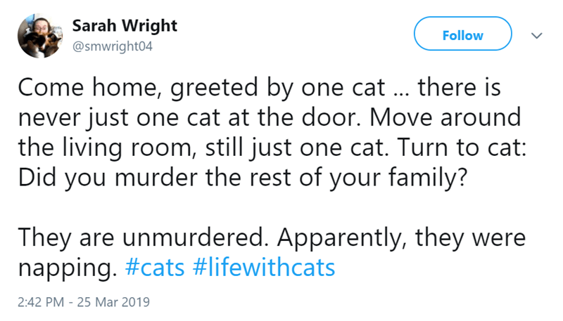 Text - Sarah Wright Follow @smwright04 Come home, greeted by one cat . there is never just one cat at the door. Move around the living room, still just one cat. Turn to cat: Did you murder the rest of your family? They are unmurdered. Apparently, they were napping. #cats #lifewithcats 2:42 PM 25 Mar 2019