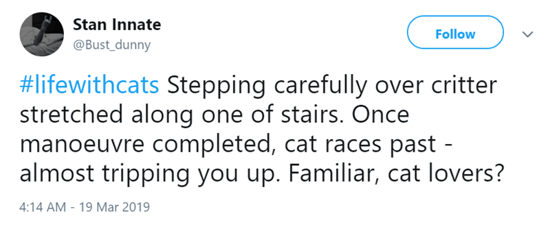 Text - Stan Innate Follow @Bust_dunny #lifewithcats Stepping carefully over critter stretched along one of stairs. Once manoeuvre completed, cat races past - almost tripping you up. Familiar, cat lovers? 4:14 AM - 19 Mar 2019