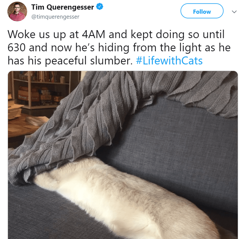 Fur - Tim Querengesser Follow @timquerengesser Woke us up at 4AM and kept doing so until 630 and now he's hiding from the light as he has his peaceful slumber. #LifewithCats