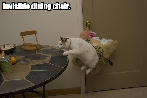 Cat - Invisible dining chair. lity