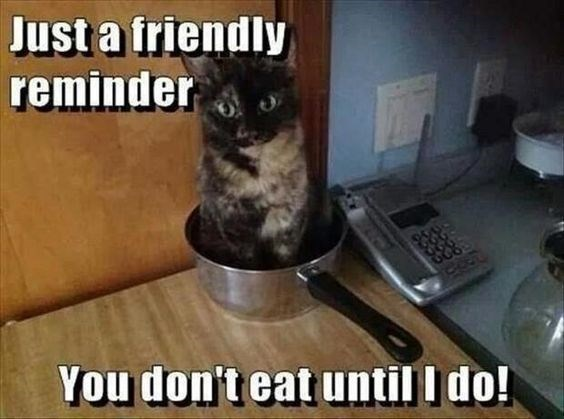 Cat - Just a friendly reminder You don't eat until I do!