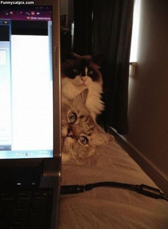 Cat - Funnycatpix.com One oo