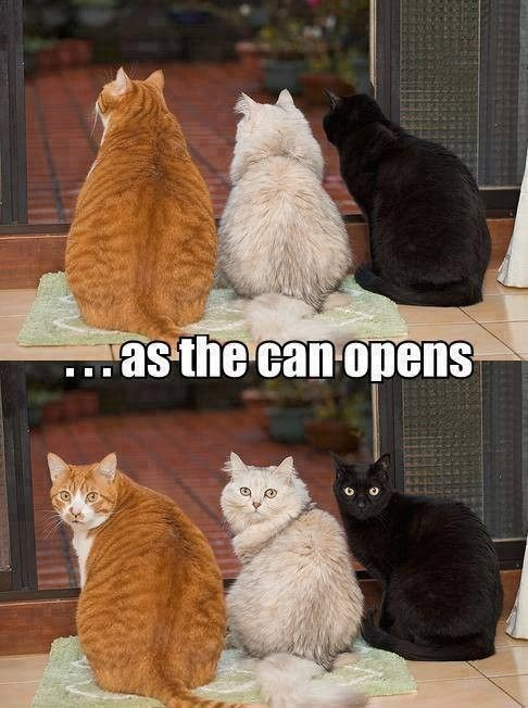 Cat - as the can opens