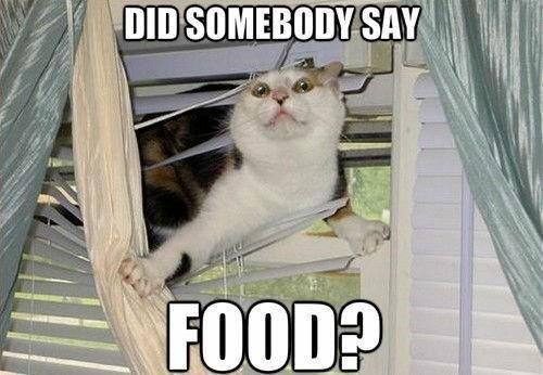 Cat - DID SOMEBODY SAY FOOD?